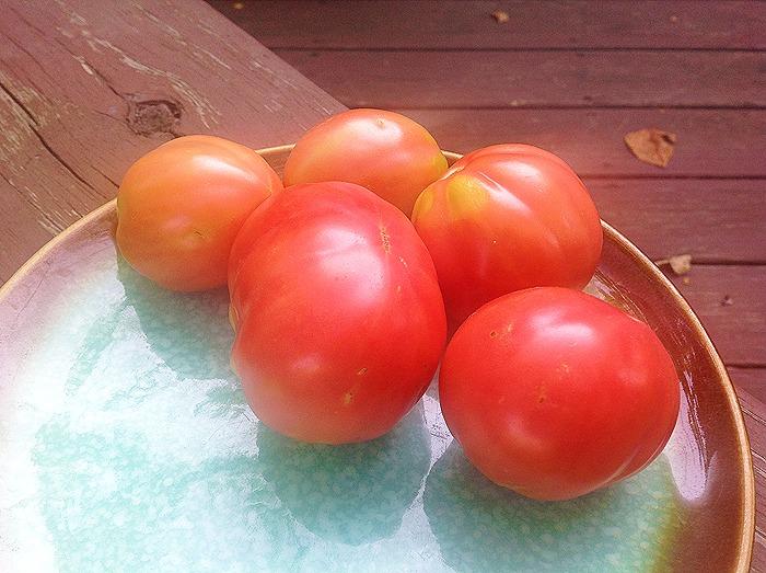 100 Pudov tomato
