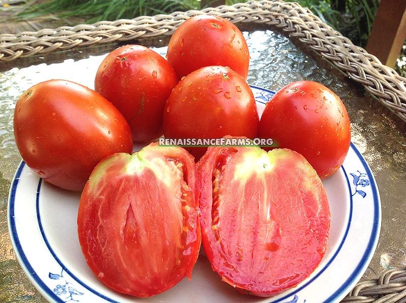 Amish-Paste-Tomato