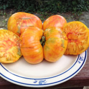 big orange stripe tomato
