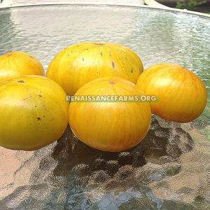 Big Yellow Zebra Tomatoes