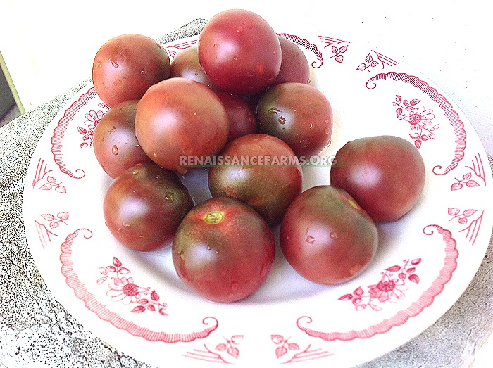 black cherry tomato seeds available for sale at. Black Bedroom Furniture Sets. Home Design Ideas