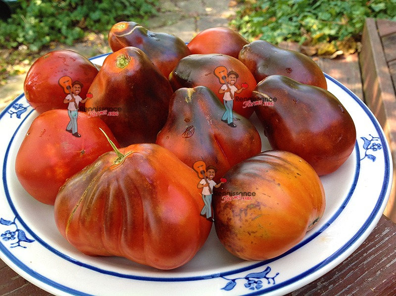 Blue Pear Tomato Images