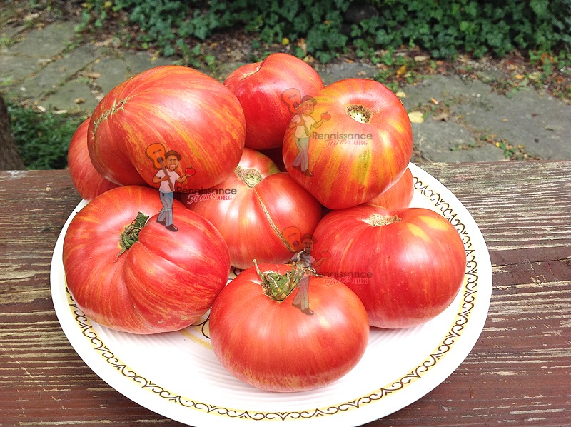 Dwarf-Firebird-Sweet-Tomato