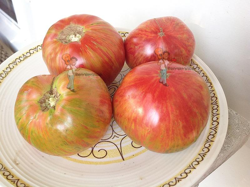 Dwarf Firebird Sweet Tomato 2017