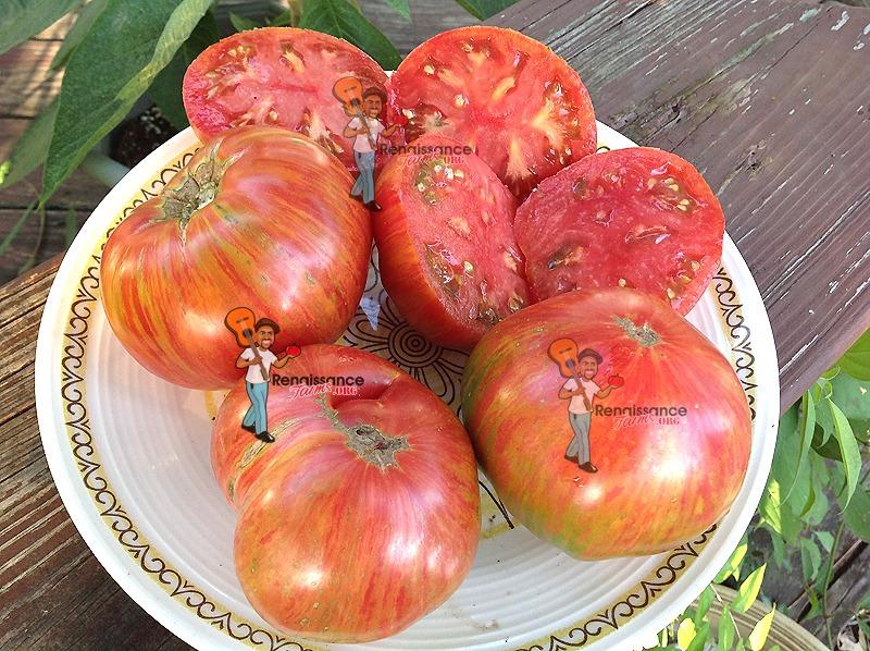 Dwarf Firebird Sweet Tomato Images