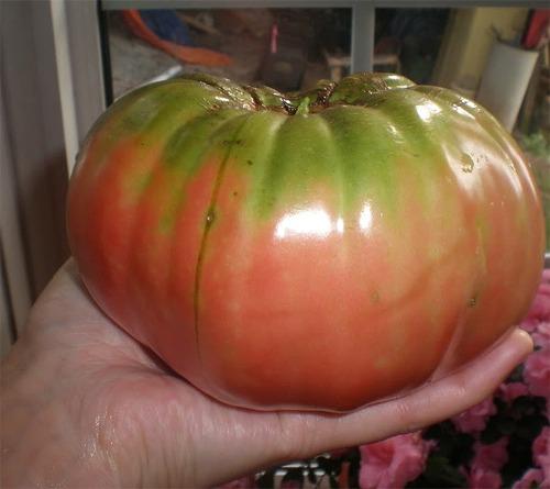 German Queen Tomato Heirloom Tomato Seeds