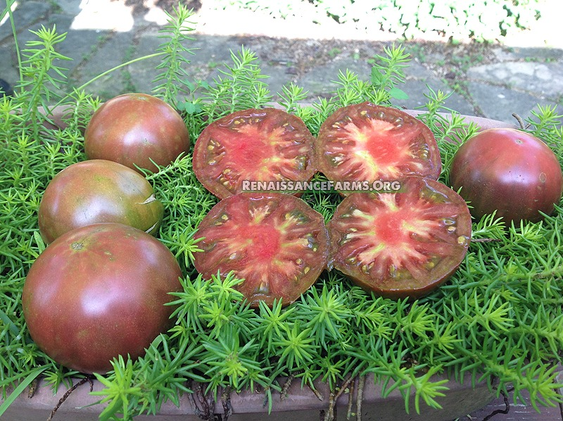 tomato black krim russian heirloom tomato seeds. Black Bedroom Furniture Sets. Home Design Ideas