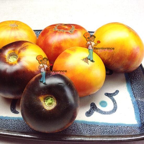 Antho Tomatoes