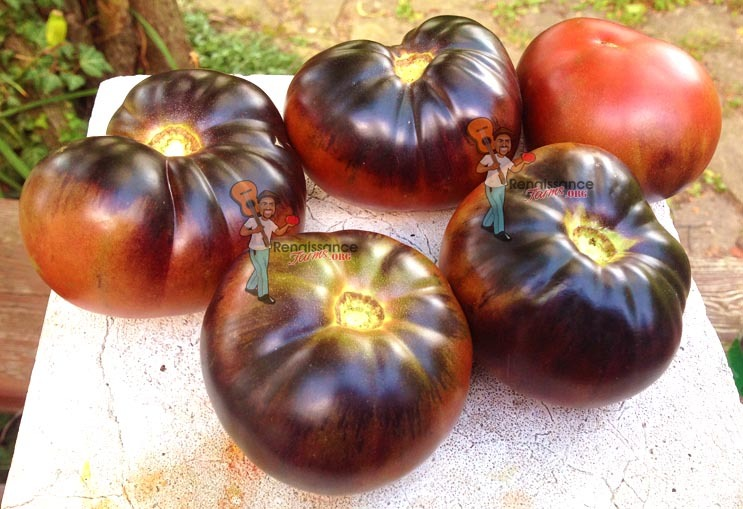 Black beauty tomato days to maturity