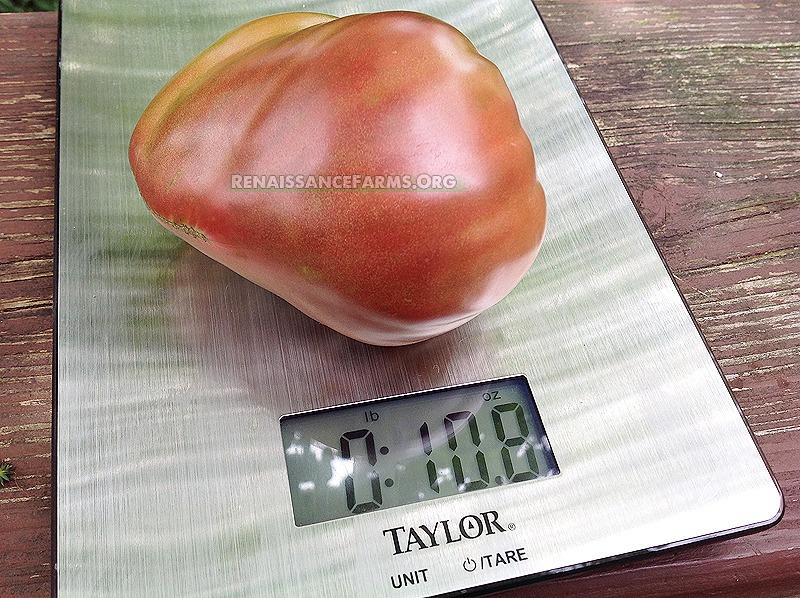 Dwarf Purple Heart Big Tomato