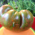Dwarf Tennessee Suited Tomato