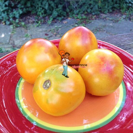 Canning Tomato