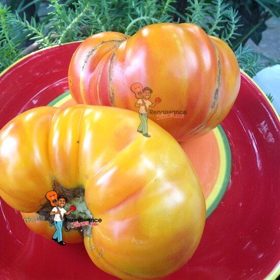 Bi Color Tomatoes