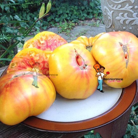 Indeterminate Tomatoes