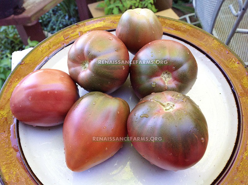Purple Heart Dwarf Tomato