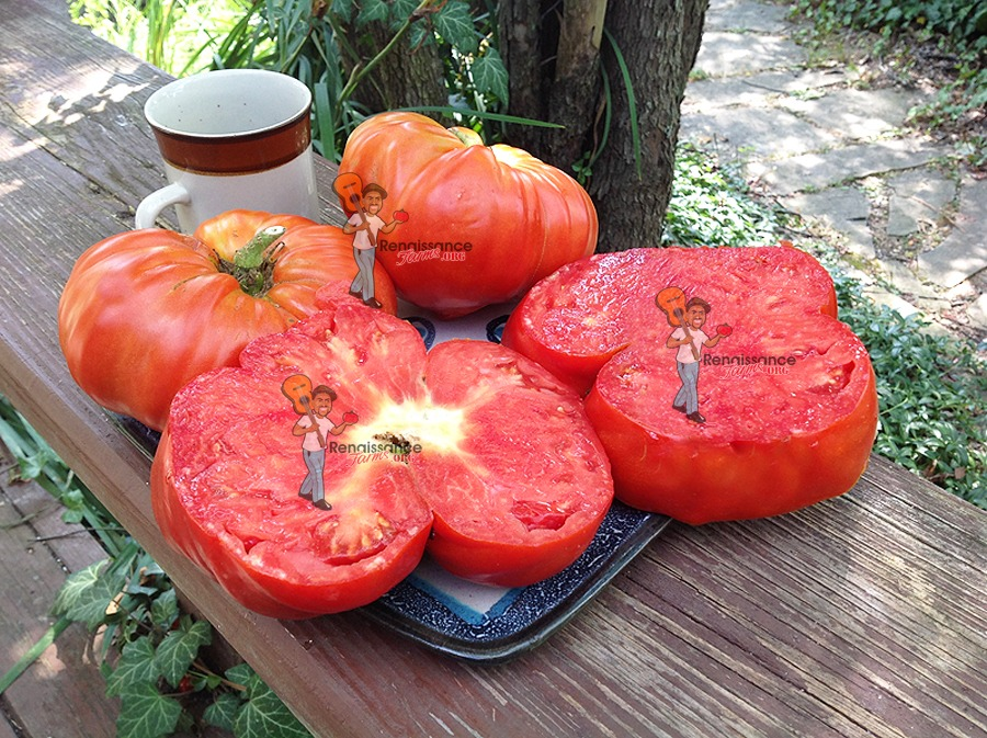 Giant Tomatoes