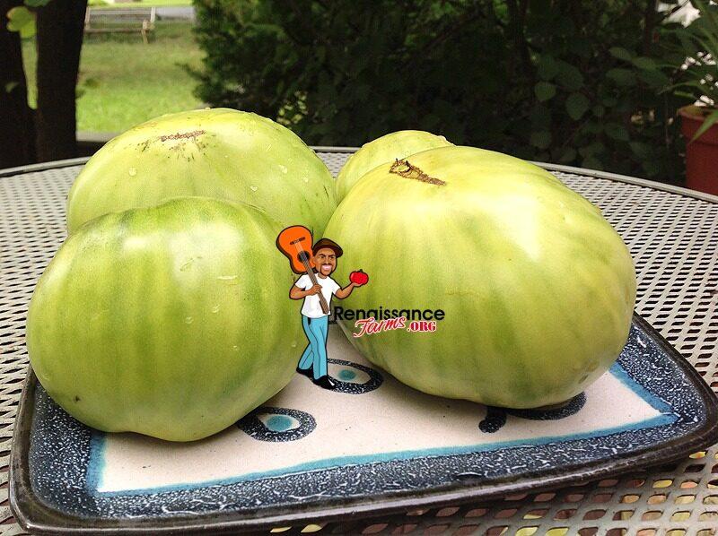 Reinhard Kraft's Green Heart Tomato