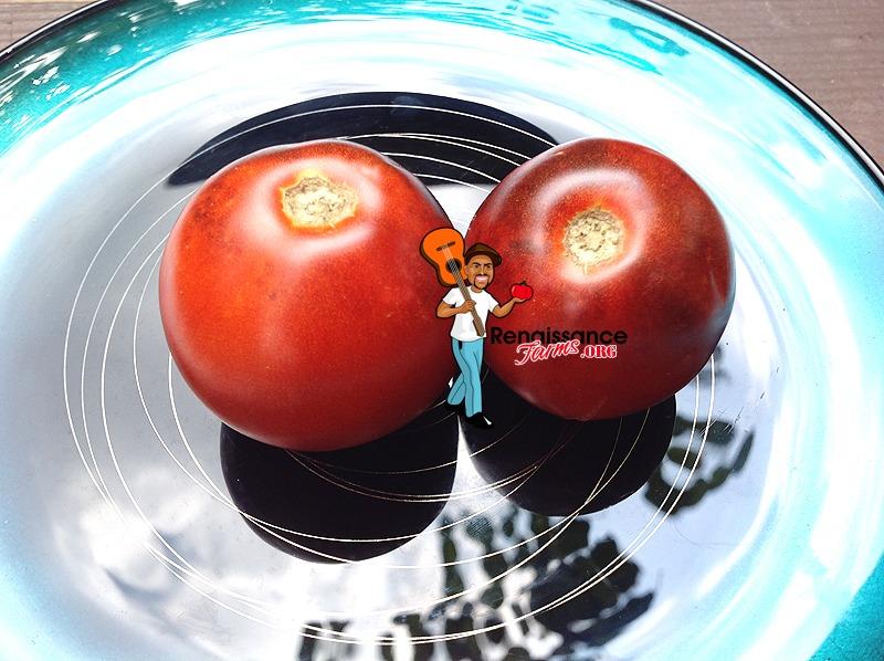 Kaleidoscope Jewel Tomato | Heirloom Tomato Seeds